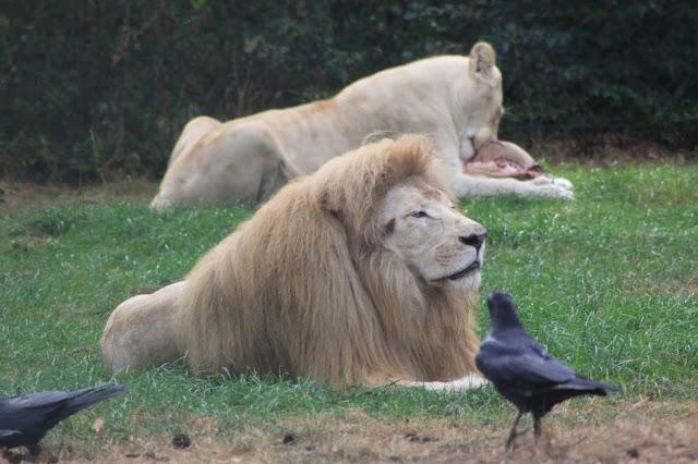 Wildtiere direkt vor dem Autofenster