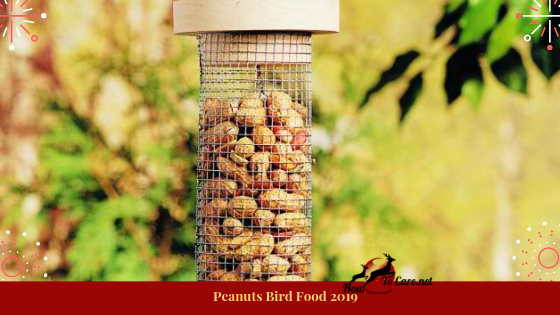 Peanuts are likewise famous to blend in suet for winter feed. Don't be that as it may, offer fowls enhanced peanuts or any peanuts with treat or chocolate coatings.