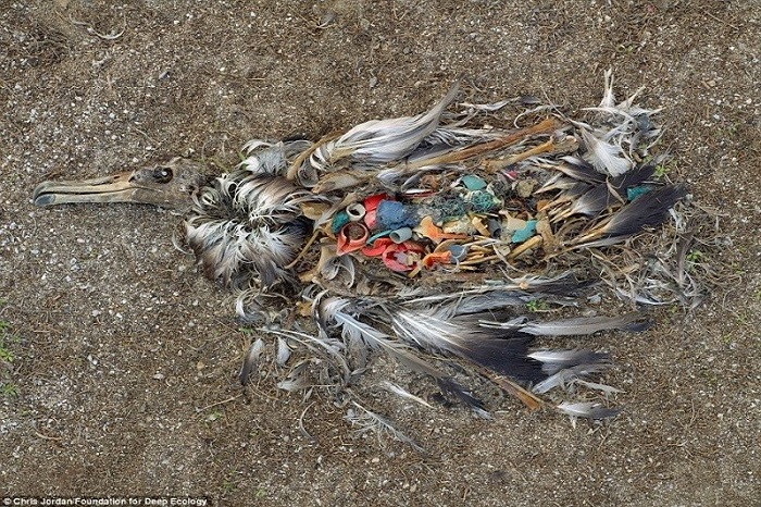 20 Pictures That Prove That Humanity Is In Danger - A dead albatross shows what happens when we litter. A living dumpster.