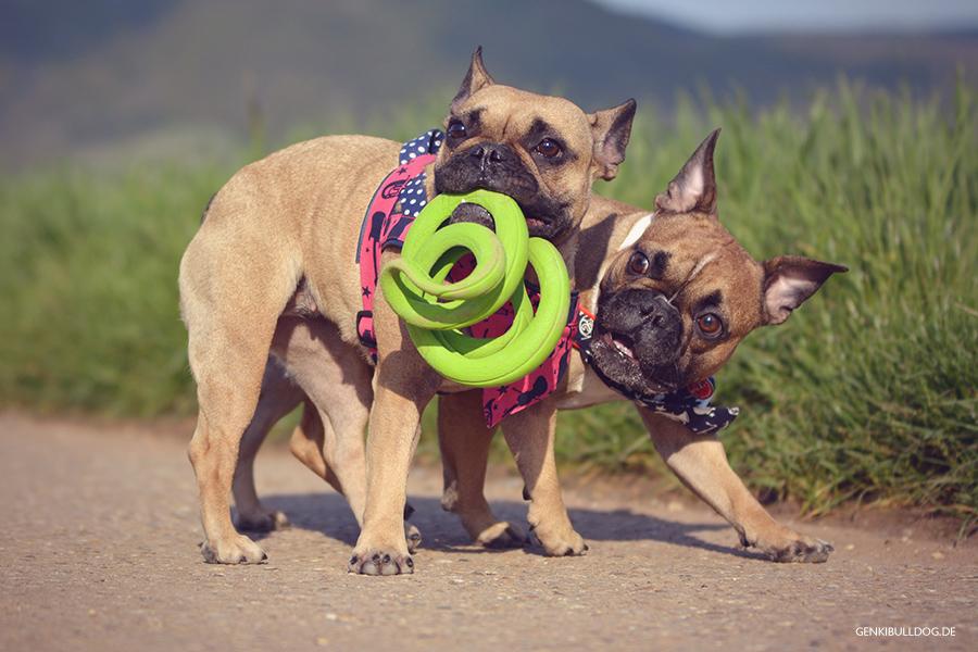 Chuckit Floppy Tug Hundespeilzeug zum Zerren
