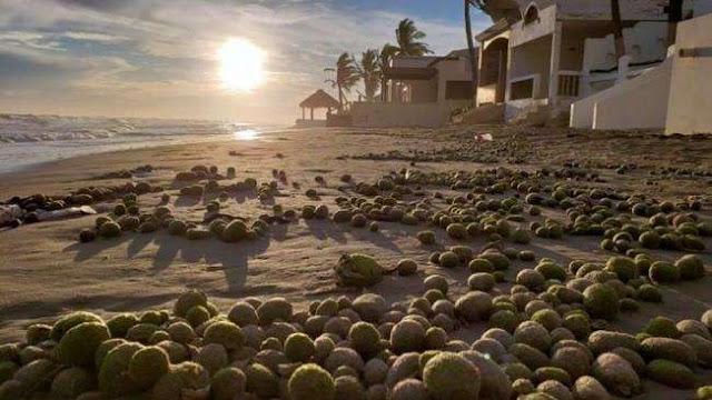 Aparecen 'huevos alienígenas' en playas de Sonora