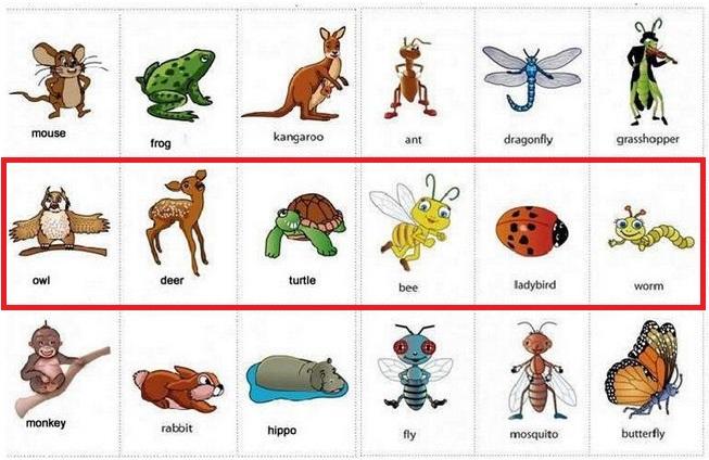 Daftar Nama Hewan Dalam Bahasa Inggris Daftar Nama Hewan Lengkap A Z