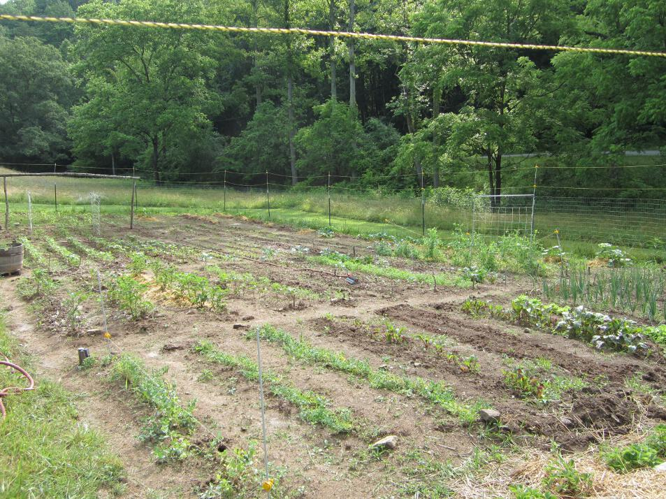 Simply resourceful updates at the wolfe house - Craigslist little rock farm and garden ...