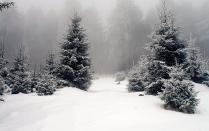Desktop HD Wallpaper Winter Wood Fir Trees Fog