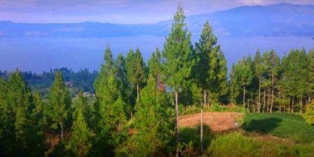 Kebun Raya Samosir Wisata Alam Dengan Hawa Sejuk Khas Dataran Tinggi Yang Akan Memanjakan Liburan Anda Sambl Menikmati Keindahan Floranya