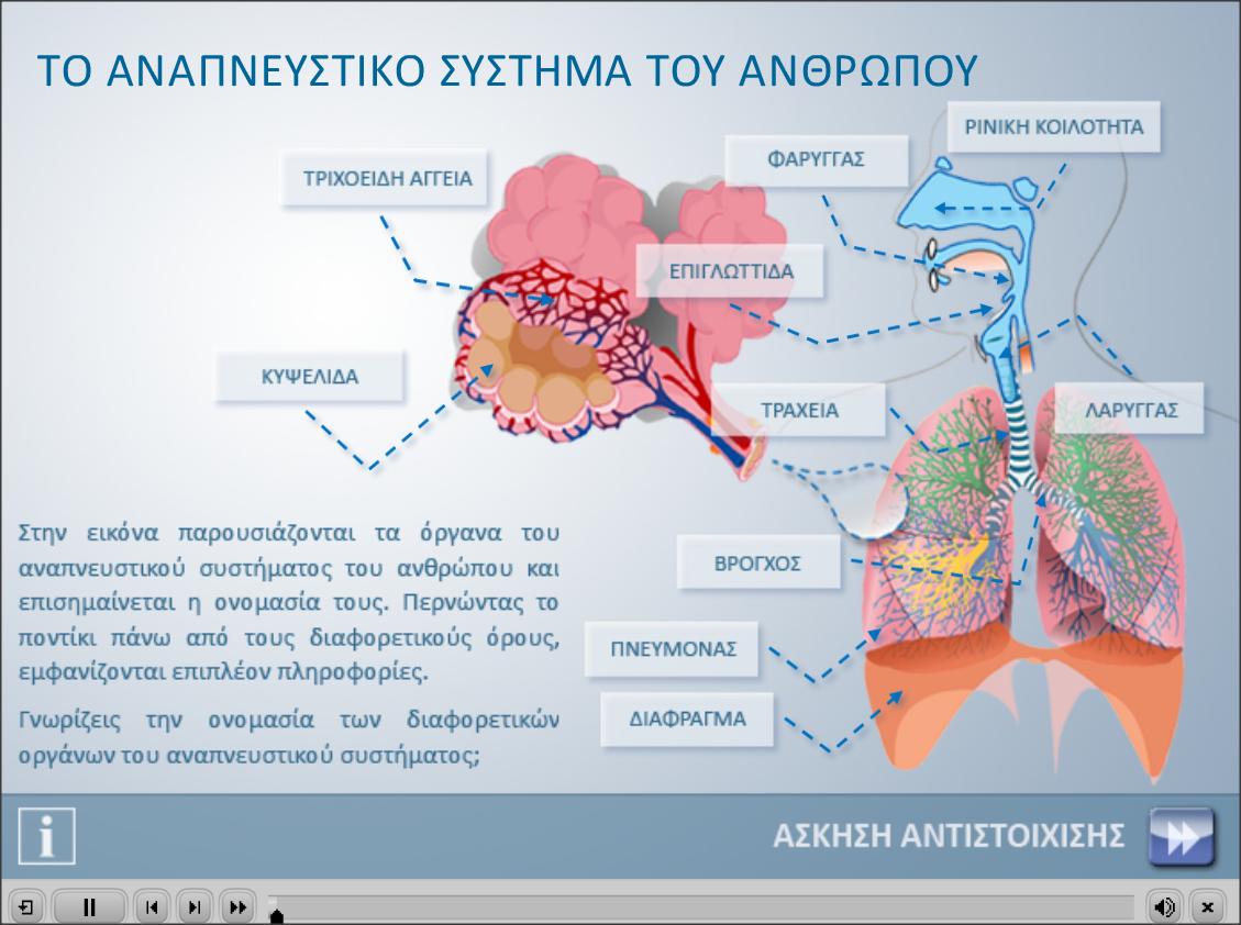 http://photodentro.edu.gr/photodentro/respiratory_system_pidx0031199/respiratory_system.swf