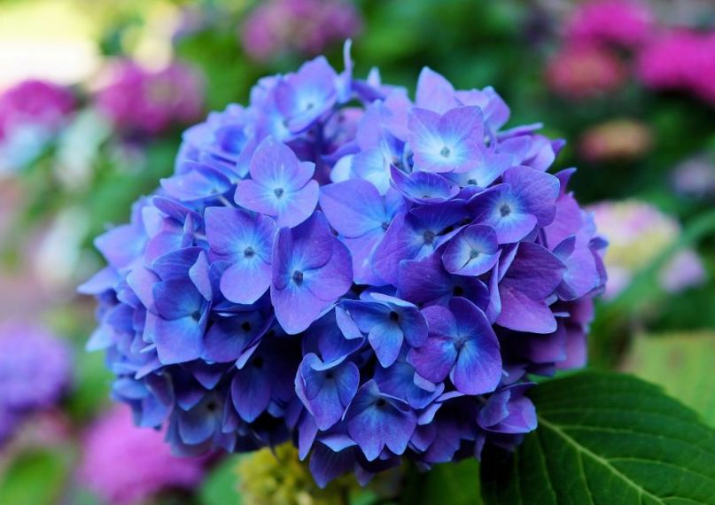 Top 50 most beautiful flowers in the world 2018 notcooltobully most beautiful flowers mightylinksfo