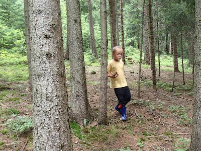 grzyby w lipcu, grzyby 2016, jadalne koźlarze, gatunki koźlarzy, grzybobranie z dziećmi, grzybobranie z koniem, Leccinum aurantiacum koźlarz czerwony, Leccinum duriusculum koźlarz topolowy, muchomor czerwony Amanita muscaria, Borowik górski Boletus subappendiculatus,  borowik szlachetny Boletus edulis