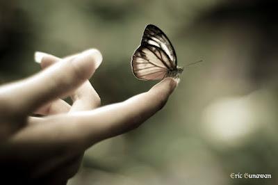 kupu kupu datang bertandang