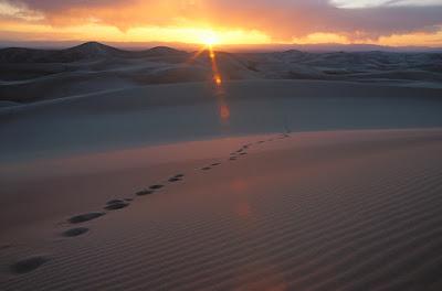 jejak di padang pasir