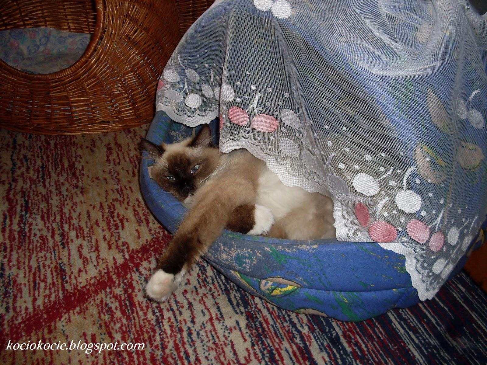 Koci Blog Gdzie śpi Kot