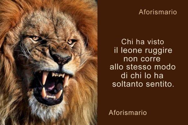 Aforismario Aforismi Frasi E Proverbi Sul Leone E La Leonessa