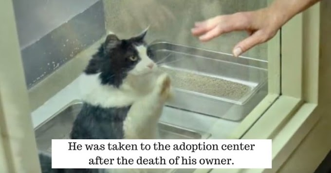 Cat Ignored by People, Kept Pawing at Window Whenever They Would Pass, Until Finally Someone Finally Noticed Him!
