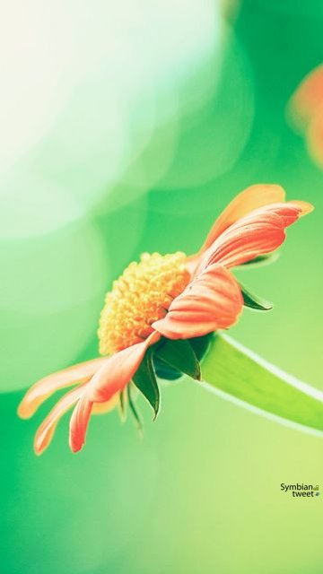 Free high quality wallpapers for nokia touch phones - Touch screen wallpapers for mobile ...