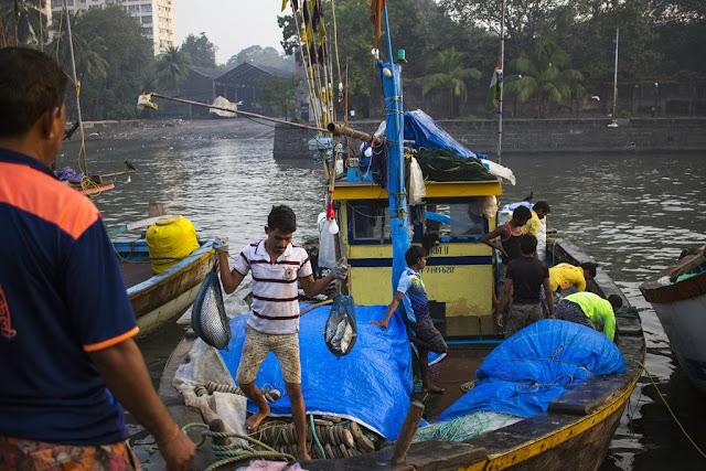 activity, fish, fishermen, fishing boat, sassoon docks, arabian sea, mumbai, india,