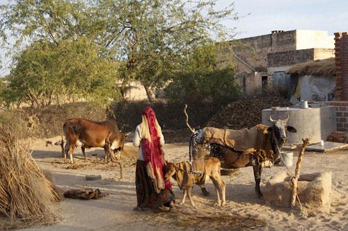 AMARGARH HOTEL JAISALMER: The Thar Desert ...jaisalmer ...  AMARGARH HOTEL ...