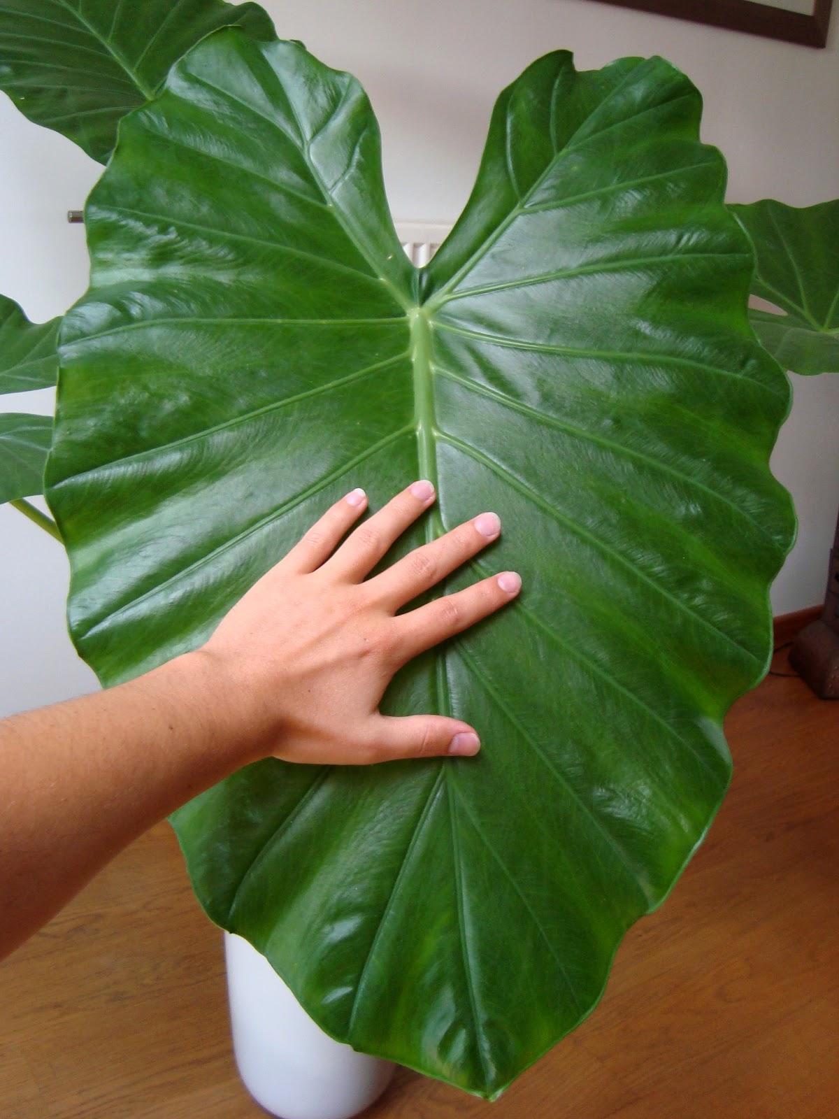 plante verte grande feuilles