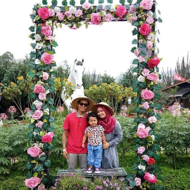 Taman Begonia, Kebun Bunga Romantis di Lembang Bandung