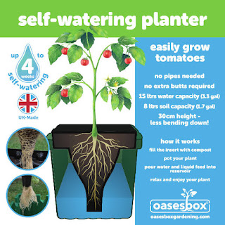 Oasesbox for growing tomatoes