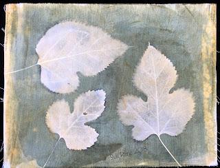 Solarfast prints_Sue Reno_ Image 22