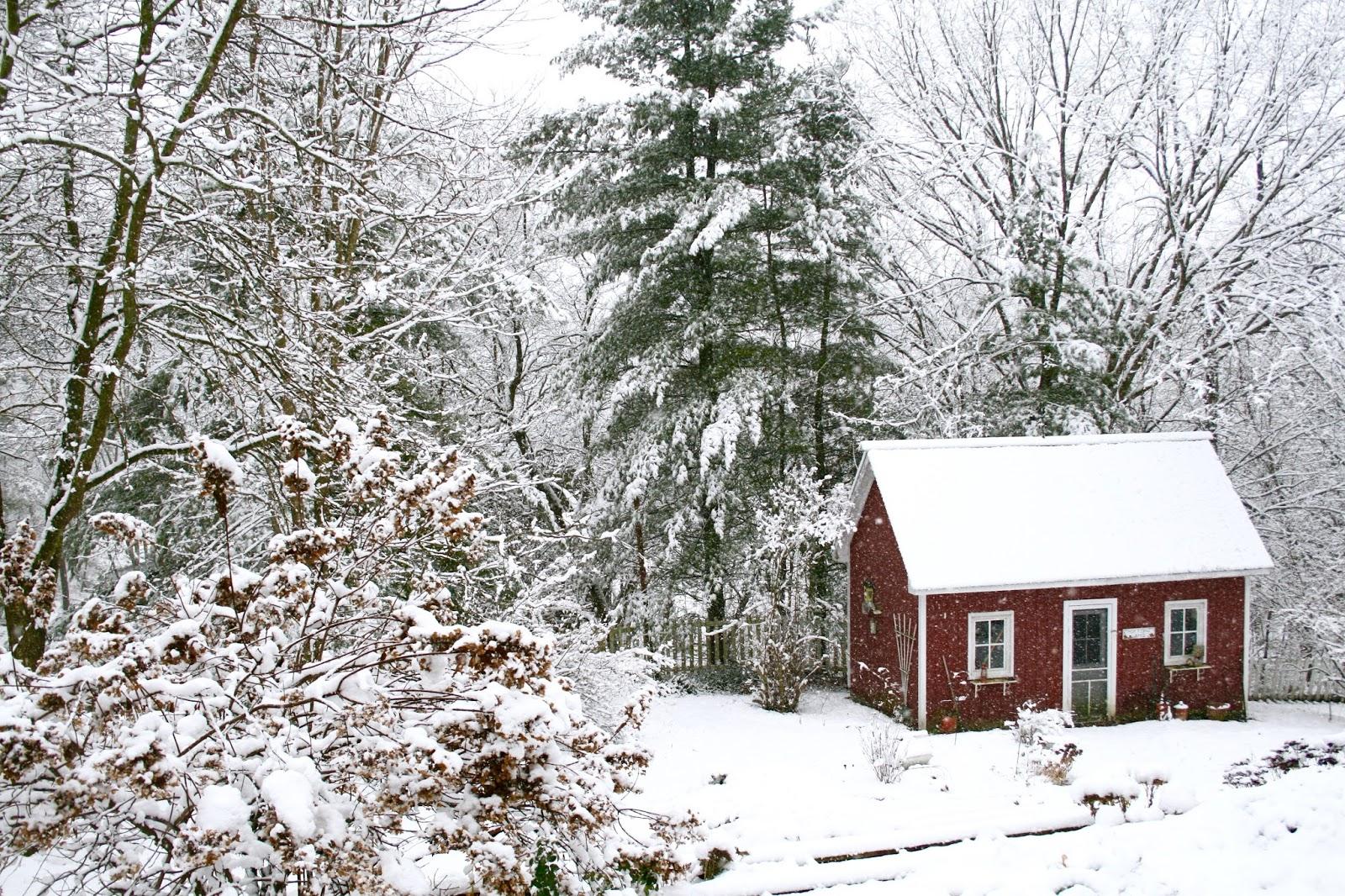 the garden in fresh fallen snow amy u0027s creative pursuits