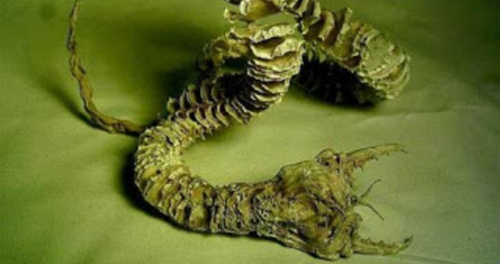 Asal Mula Monster Kriptozoologi di Gurun Gobi