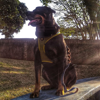 Molly usando o peitoral da Zee Dog