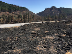 Horse Prairie Fire was largest wildfire starting on ODF-protected land in 2017