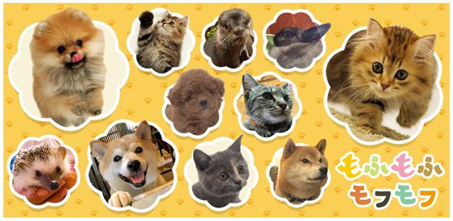 【TV紹介】NHK「もふもふモフモフ」に愛犬の駅が紹…