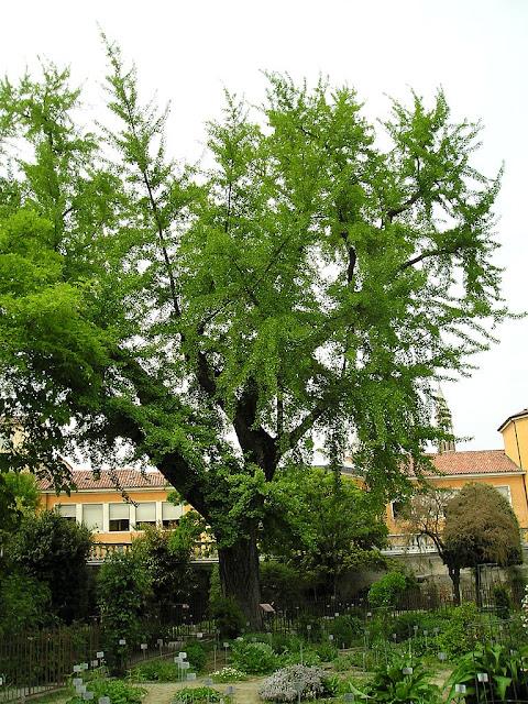 Colecciones de plantas en el Jardín Botánico de Padua