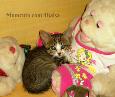 post, fotografico, fotografia, fotografar, gatos, gato, gatinho, gata,