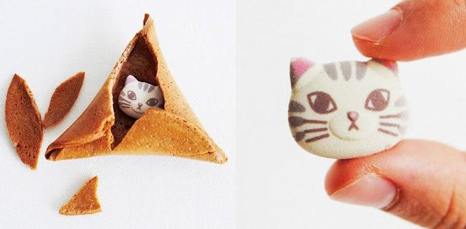 【瘋搶無誤】felissimo推出限量版幸運曲奇 咬開就有萌貓樣