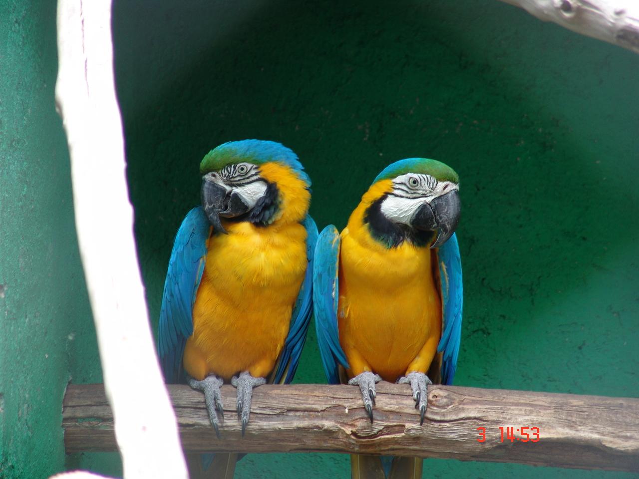 Las Aves: HERMOSAS AVES