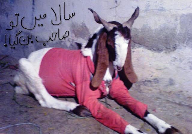 Bakra Eid Mubarak Photos