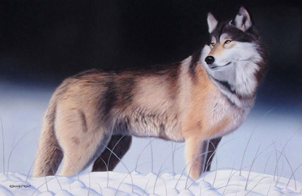 Cuadros Pinturas Arte Bonitos Cuadros Con Lobos