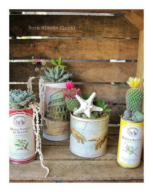 latas de té con plantas