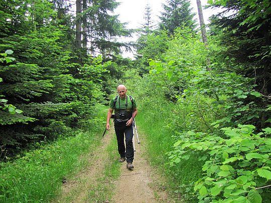 Na leśnej ścieżynie.