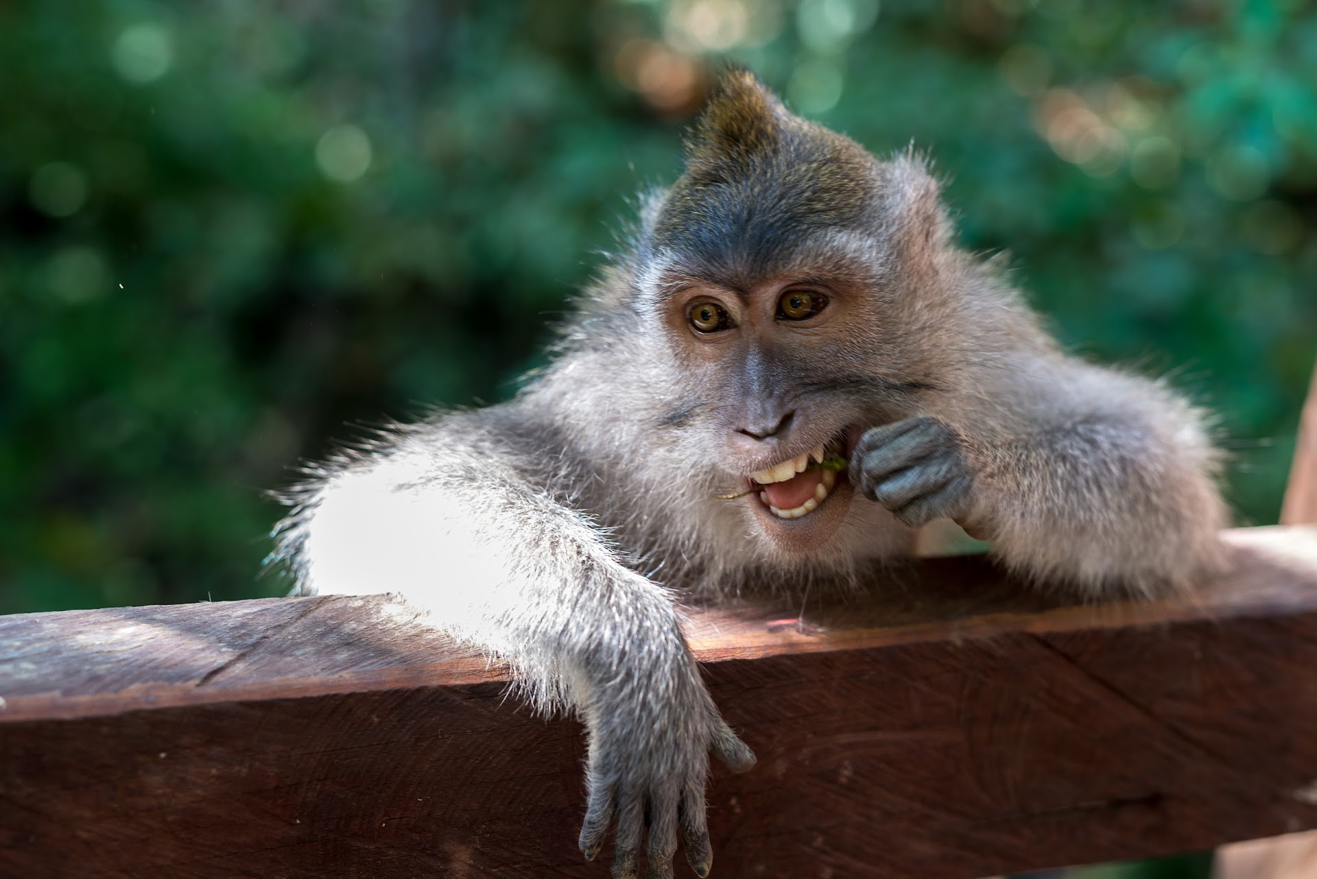 monkey photography, travel blogger, bali ubud, monkey sanctuary, photographer san francisco california, bay area, things to do in bali, bali blogger
