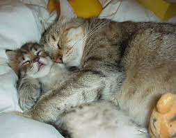 7-fakta-unik-seputar-kucing-alaurang.com