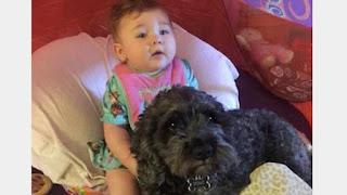 Eroico cane salva bambina dalle fiamme facendole scudo con il suo corpo