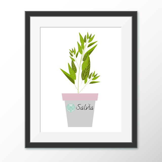 Salvia czyli Szałwia. Dlaczego akurat ta roślina?