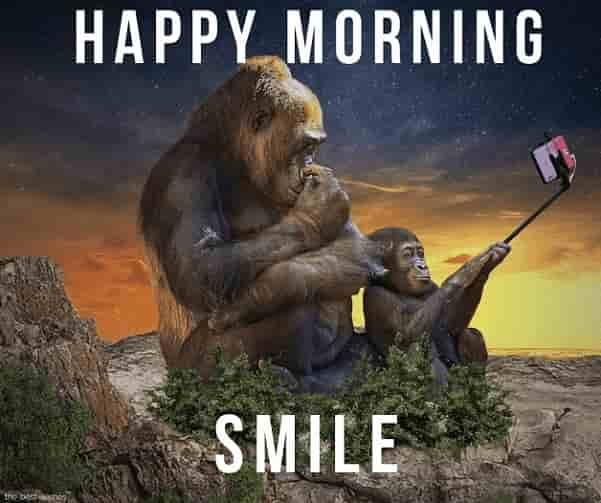 best funny memes monkey selfie
