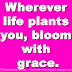 Wherever life plants you, bloom with grace.