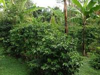 Perbedaan Jamur dengan Tumbuhan Tingkat Tinggi