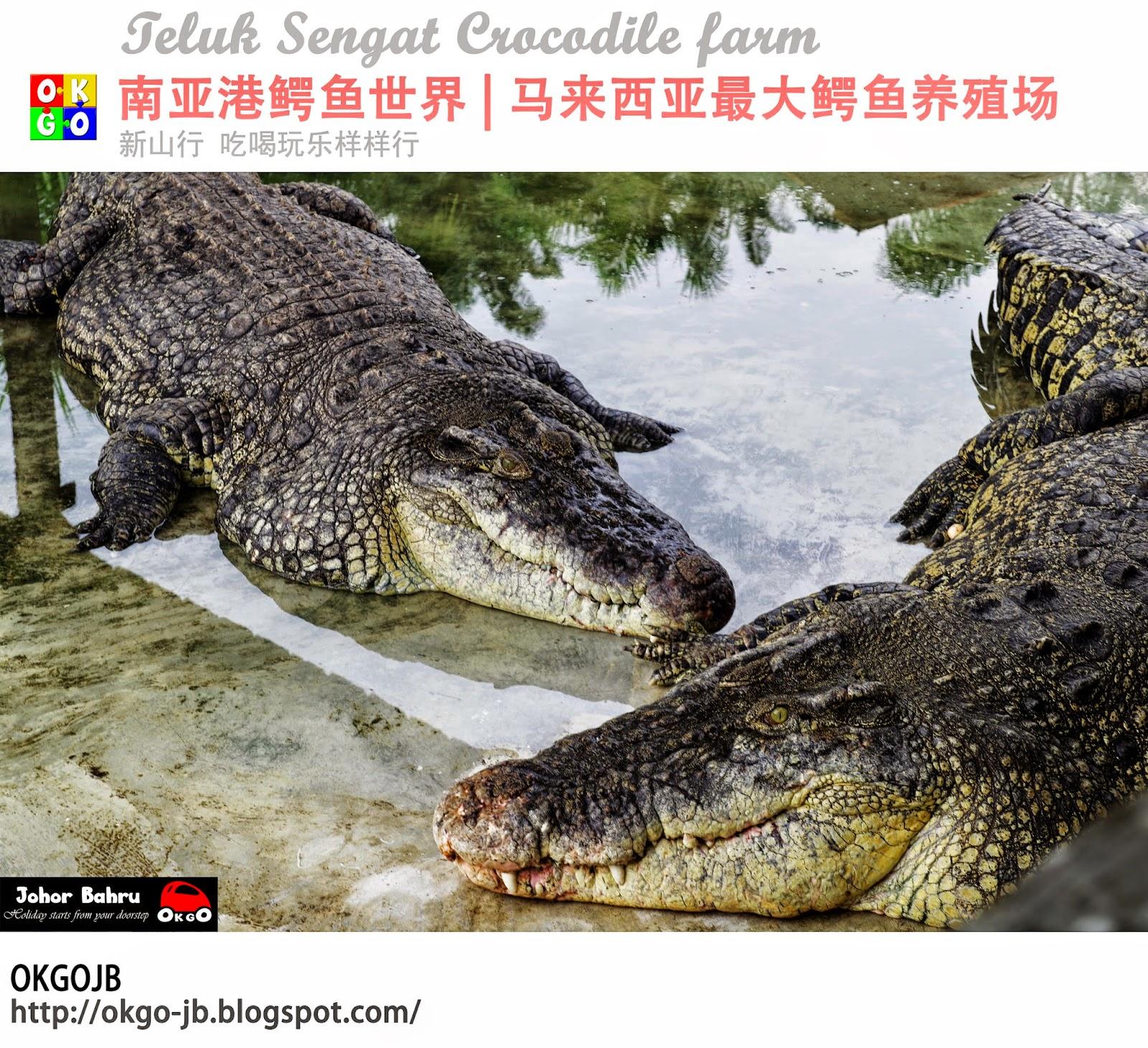 Desaru Teluk Sengat Crocodile Farm