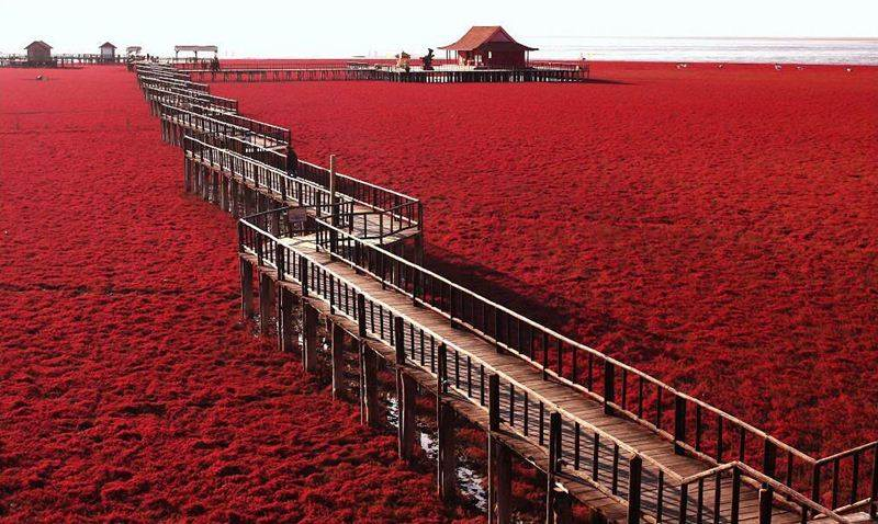 FANS OF NATURE: Red Beach – Panjin, China