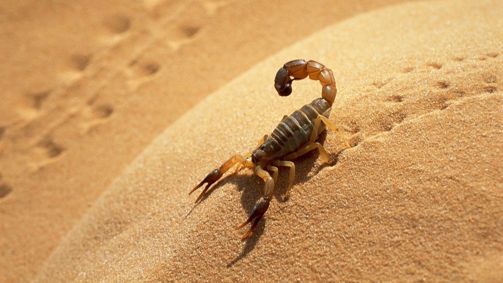 scorpions-01