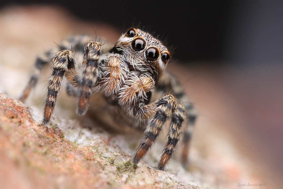 Spider Macro Photography Art