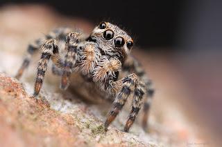 Foto hewan laba-laba