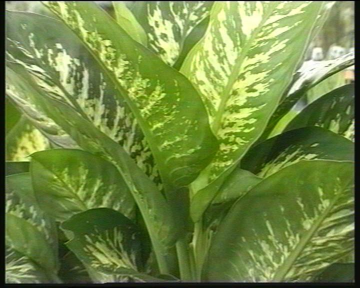 Fitosofia vivero de plantas ornamentales segunda parte for Diferentes tipos de plantas ornamentales